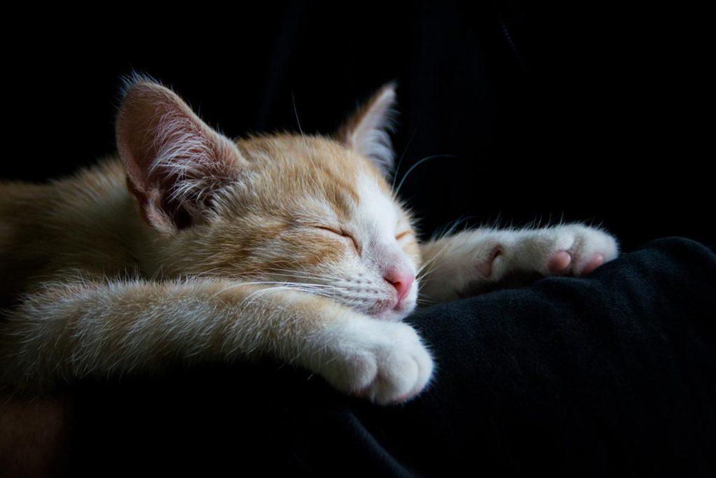 Idées reçues sur l'insomnie